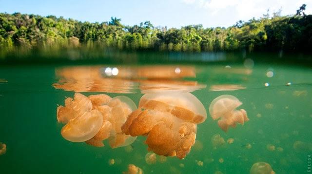 el lago del as medusas